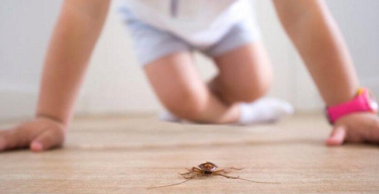 Evdeki akarlar ve sivrisineklere doğal çözümler…