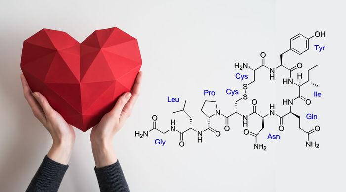Aşk Hormonu – Oksitosin Hormonu Nedir?